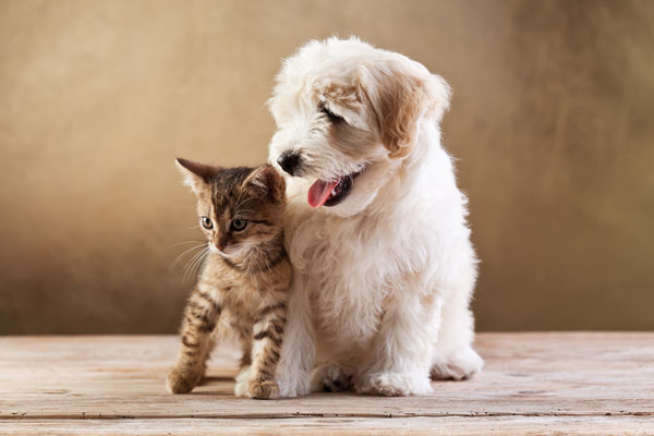 Best friends - kitten and small fluffy dog looking sideways