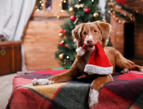 Holiday Safety How-To for Pets