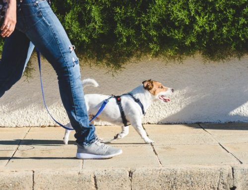 Canine Code of Conduct: The Principles of Dog Walking Etiquette