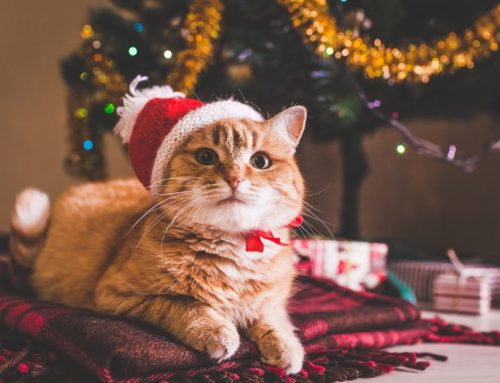 Make Only Happy Memories With Our Holiday Pet Safety Tips