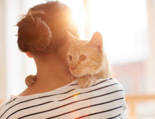 Can Cats Get Separation Anxiety?