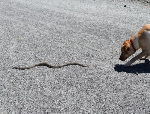 Sneaky Slithers: Keeping Your Pet Safe from Snakes in the Yard