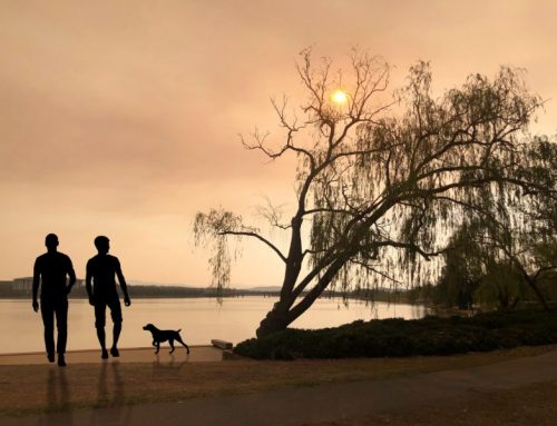 Fast Acting: The Best Ways to Protect Your Pet From Smoke and Wildfires