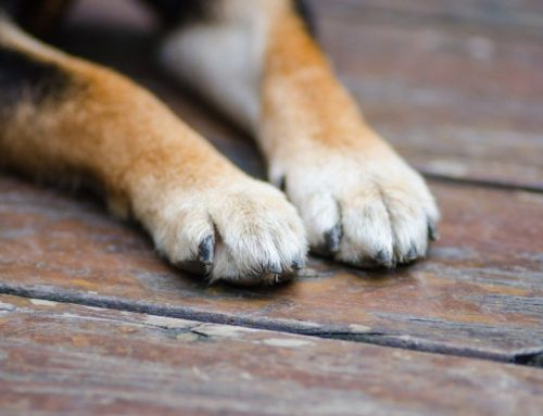 Frito Footsies: The Case of the Corn Chip and Why Your Dog's Paws Smell