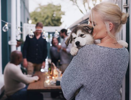 Cheers! Holiday Party Etiquette for Pet Owners