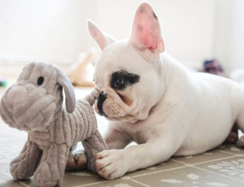Rounding Up the Most Popular Pet Toys of 2020