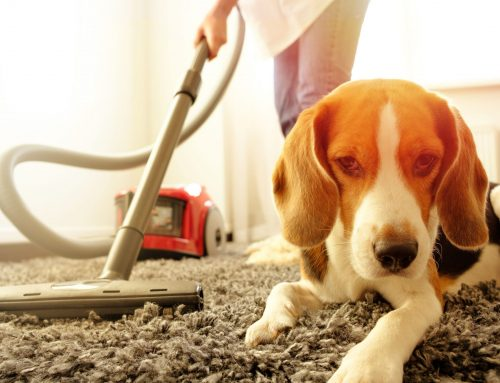Spring Cleaning Safety Tips to Protect Your Four-Legged Friend