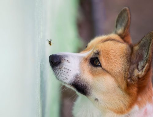 Waiter, There's a Fly in My Soup! Can Eating Flies Harm My Dog?