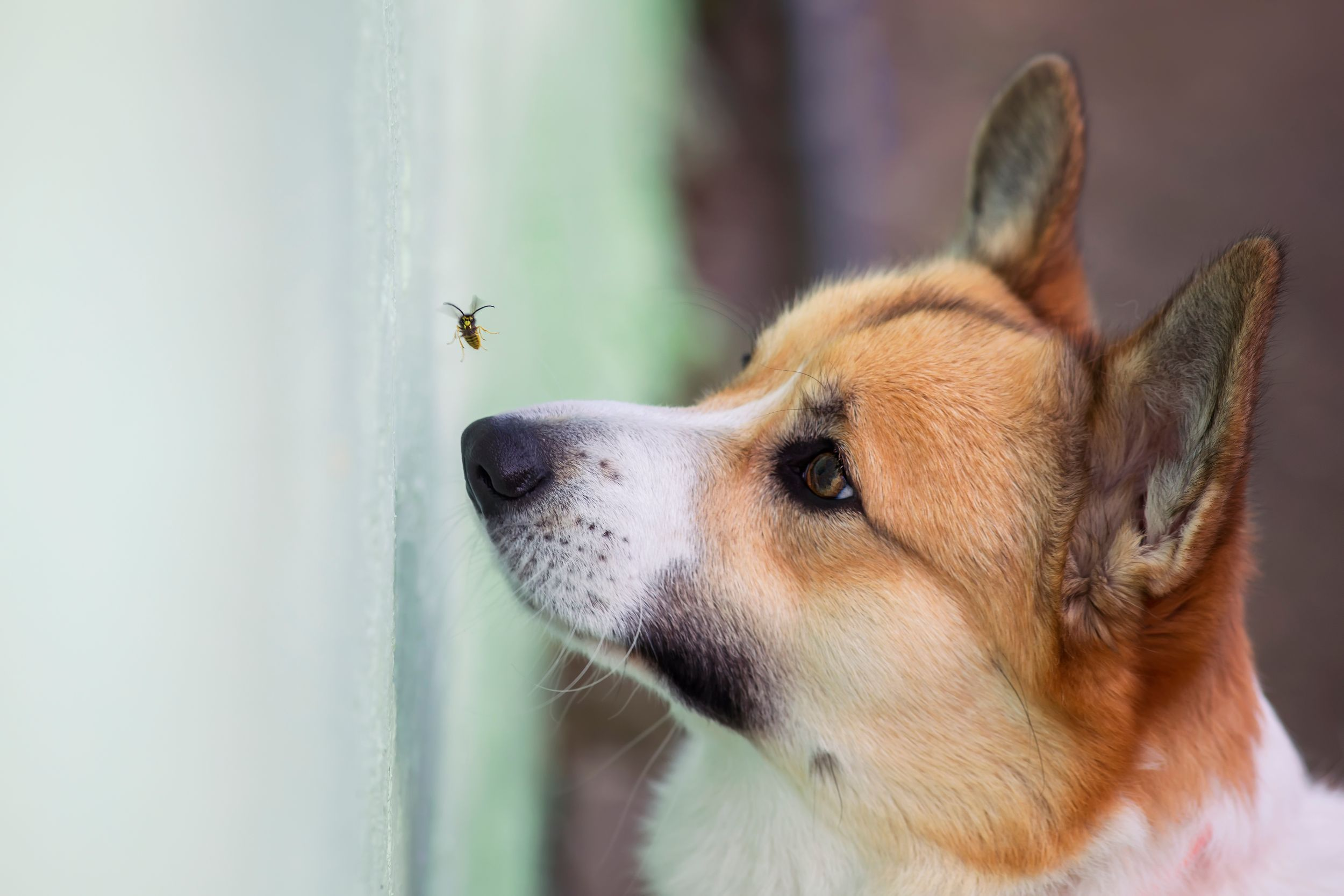 Citrus Heights dog eating bugs.