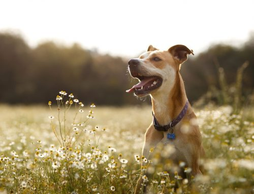 Should Your Dog Get the Leptospirosis Vaccine?