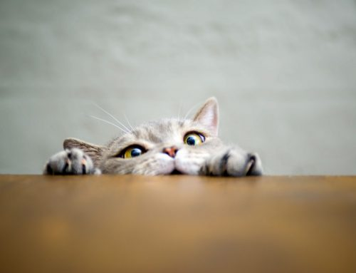 The Cat Wellness Exam (And Why Your Cat Needs You to Bring Them In)